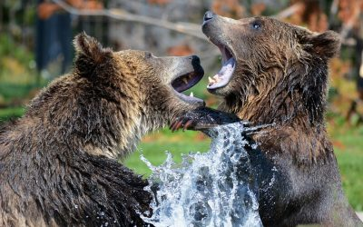 Respond To A Bear Market With Measured And Deliberate Action